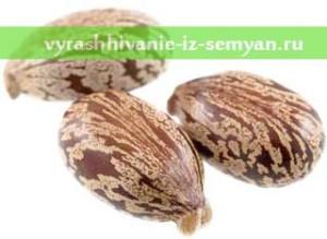 semena-kleshheviny