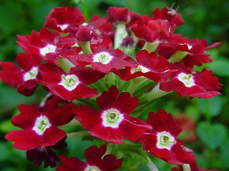 красивые фото цветы и коляска